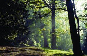Woodland at Harewood credit Harewood House Trust