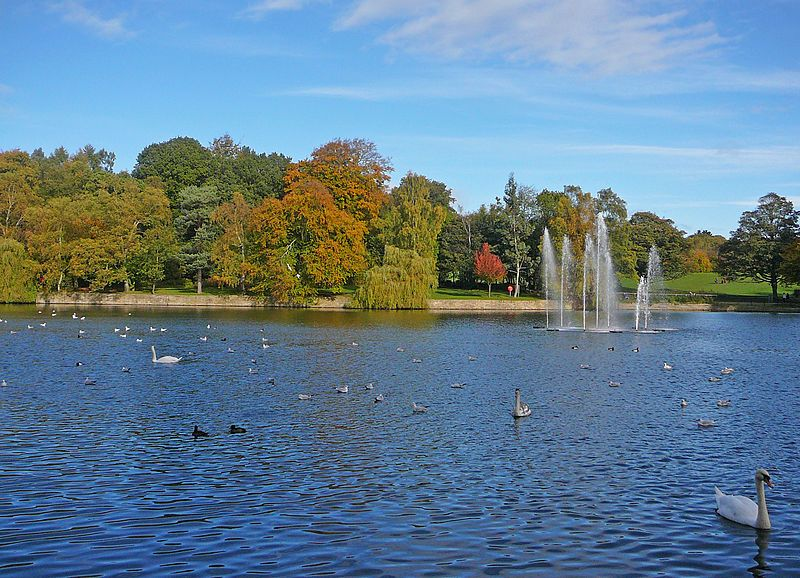 A picture of the lake at Roundhay Park